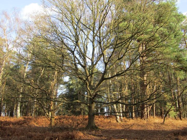 Dersingham Bog - A Tree Hugger's Paradise